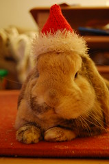 Santa Bun does not think you deserve a gift