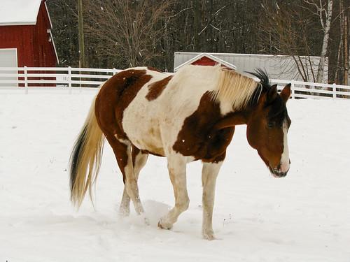 horsingaround_2-2731