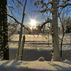 January 2010 Snow Scene