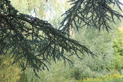 20090919 Edinburgh 20 Royal Botanic Garden 489