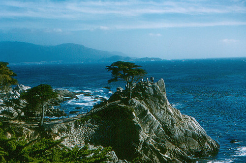 "Pebble Beach - ""Lone Cypress"""