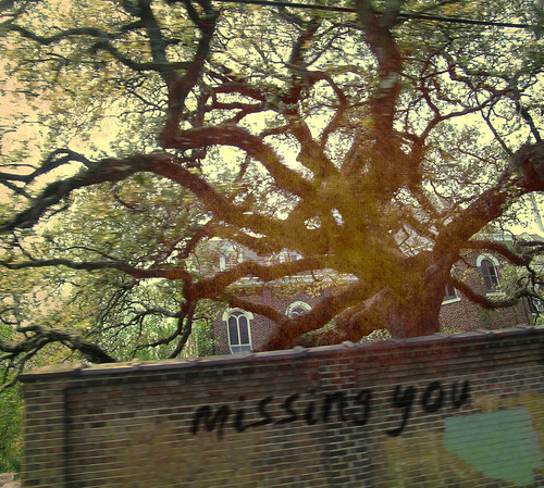 i miss you in the memories we haven't made yet by pj djennel