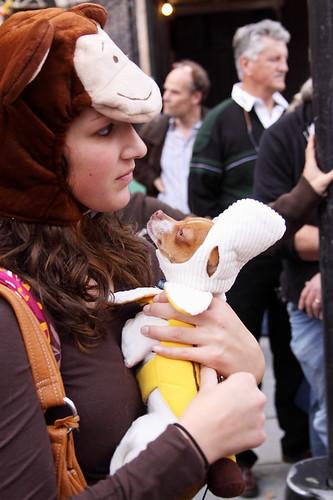 Mommy monkey and banana-dog