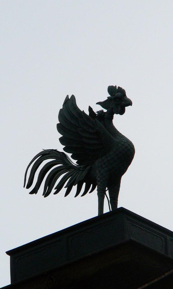 sbird