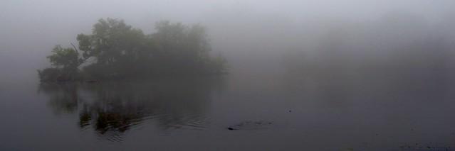 Fish Feeding in the Fog