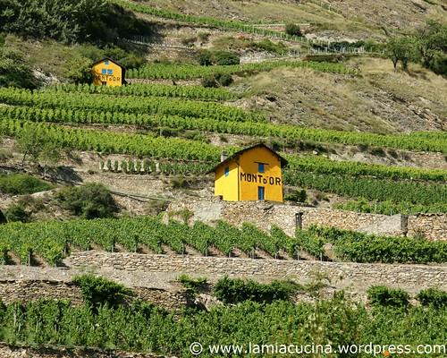 Schweizer Weine 0_2009 08 04_1920