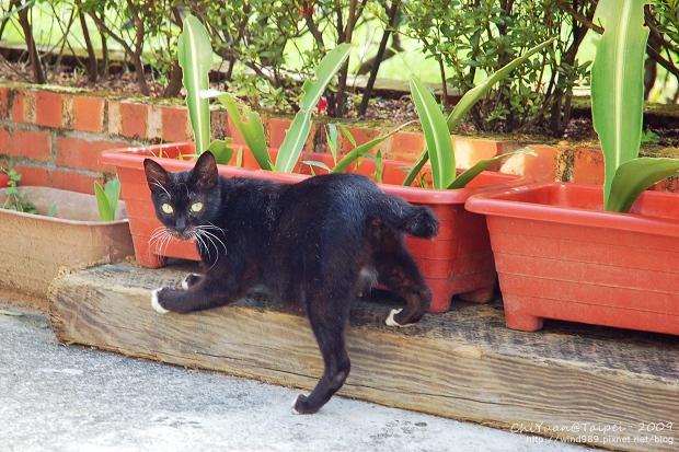 [侯硐]Cat。貓鎮中的一紳士貓05.jpg