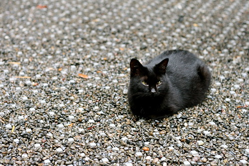 Kitten at Fushimi-Inari