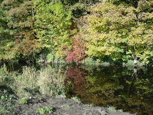 Water Of Leith 1