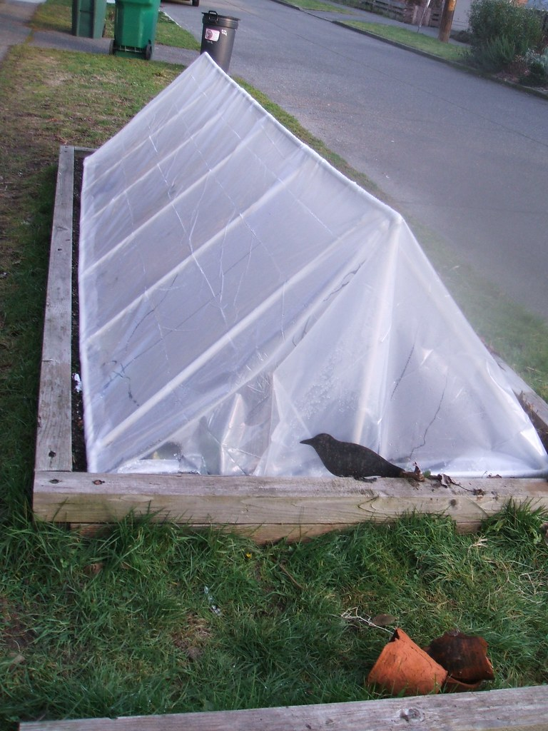 Hoop house for winter greens