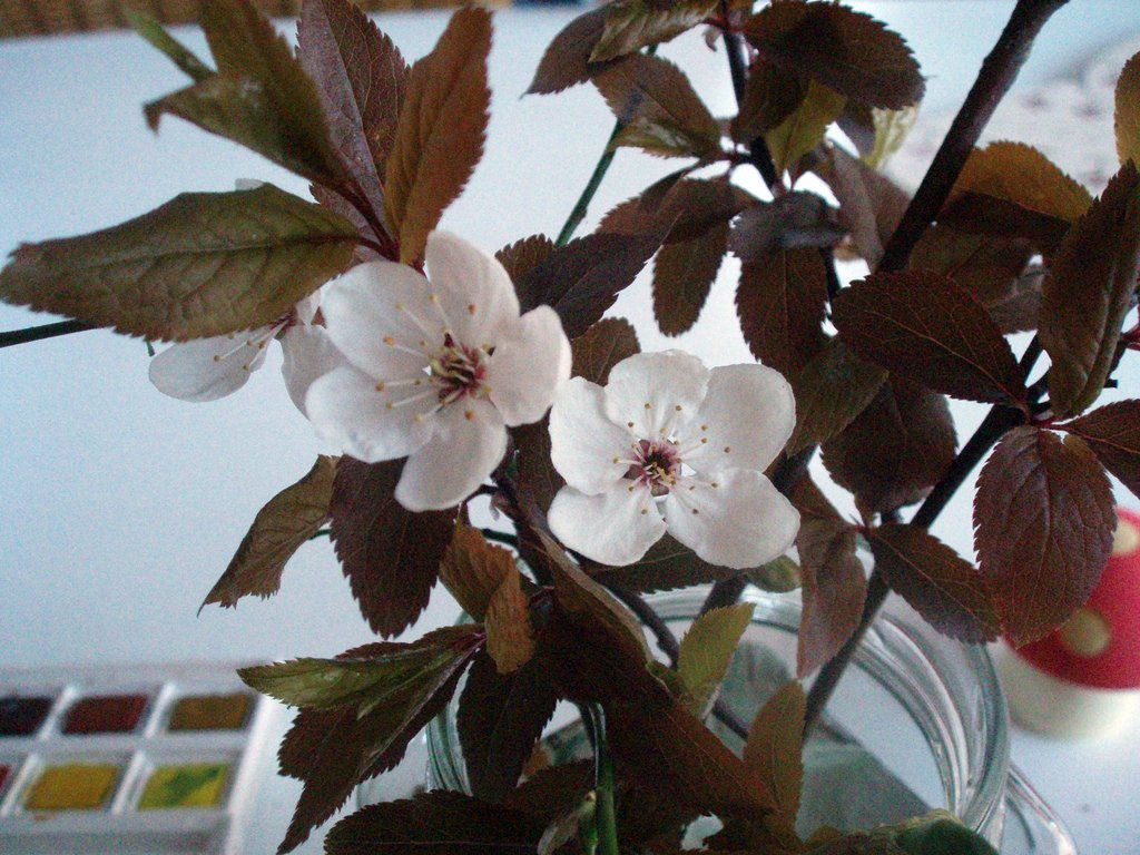 blossom in a jar