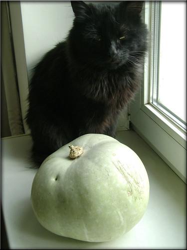 Halloween cat :)