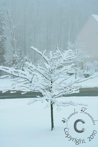 365-35 Snow tree