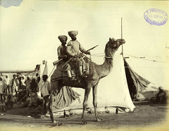 Camel Corps
