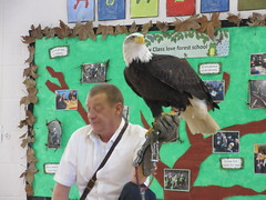 A visit from a Golden Eagle
