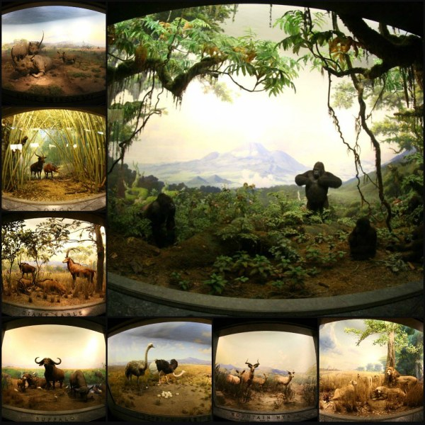 African Mammals Museum Natural History NYC