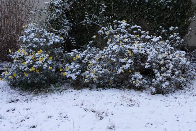 Snow & Flowers