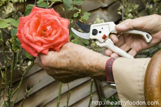 Live Healthy  102 age elderly longevity secret 33532207153_071e0bdcac_o