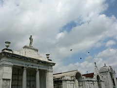 Birds over society tombs