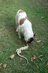 our dog makes another kill