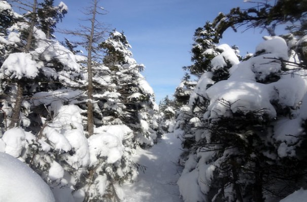 Upper Hi-Cannon Trail