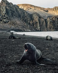 Among the South Shetland Island archipelago is the aptly named Deception Island. The island's ring of mountains provides near perfect protection to the bay inside. For a few years a sealing industry boomed there. Then the whaling industry. The calm waters