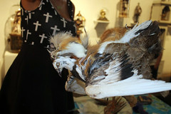 3rd Biennial Taxidermy show55