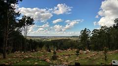 Cerro El Centinela 3