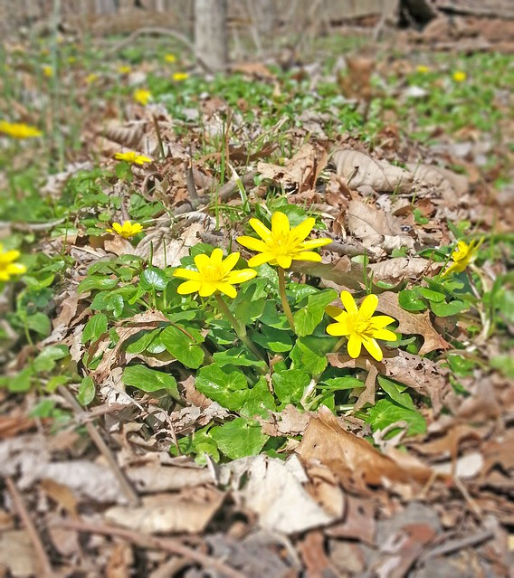 Sunny Spring Swamp Flowers