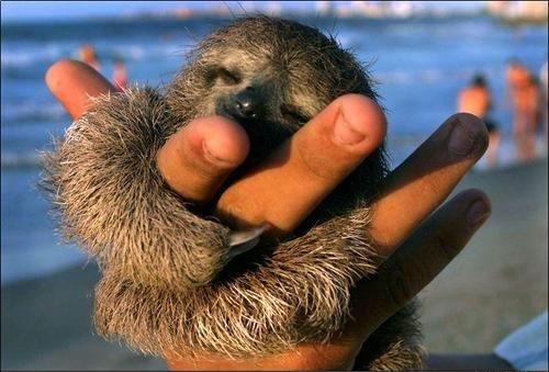 Sloth by Iamrandygirl