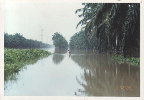 Flooded oil palm estate