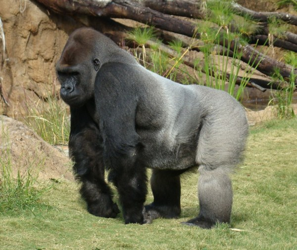 White Gorilla Ark Dev Kit Playark - Year of Clean Water
