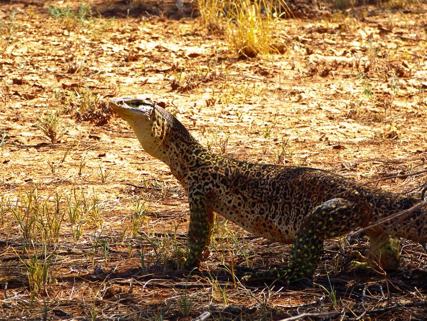 Dieser hat Leopardenhaut!