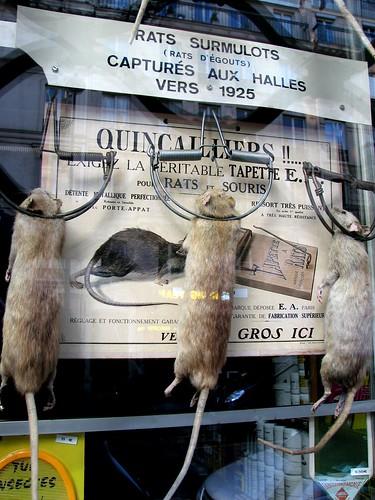 The rats at Julien Aurouze exterminators, Paris
