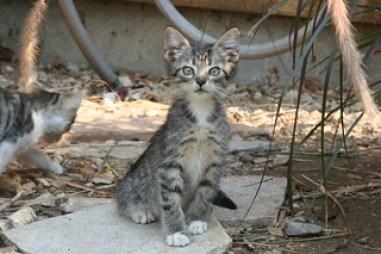 Cat overpopulation cute kitty