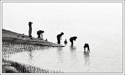 Rhythm is everywhere [..Manikganj, Bangladesh..]