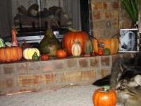 Pumpkin Fireplace Display | Flickr - Photo Sharing!