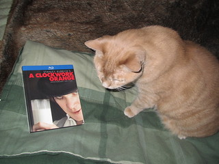 Image of a Cat with a blu-ray dvd of a Clockwork Orange