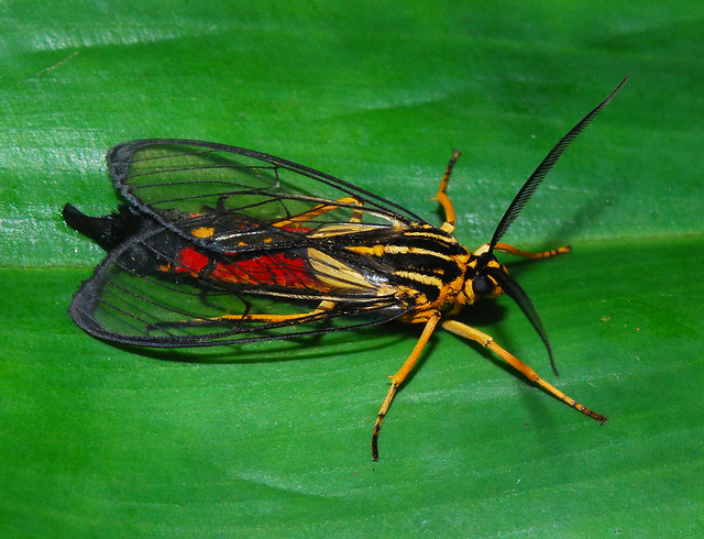 Tropical Insects in perfection  a gallery on Flickr