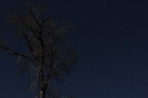 Circumpolar Star Trails