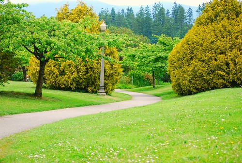 trees 'n path