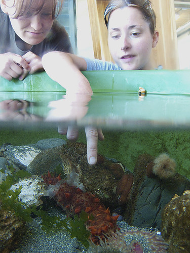 Rianna and Sarah admire their new touch tank