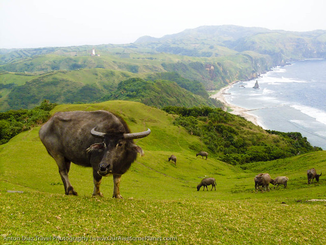 Batanes Safari