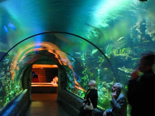 Shark Reef Aquarium at Mandalay Bay Las Vegas