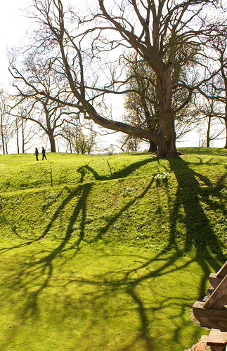 tree shadow