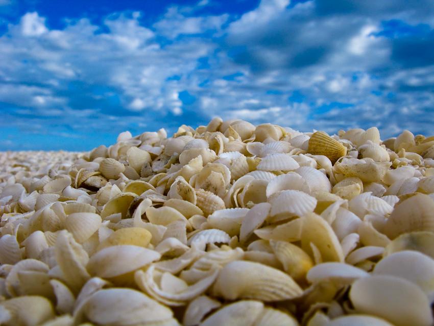 Shell Beach - tausende kleine Muscheln