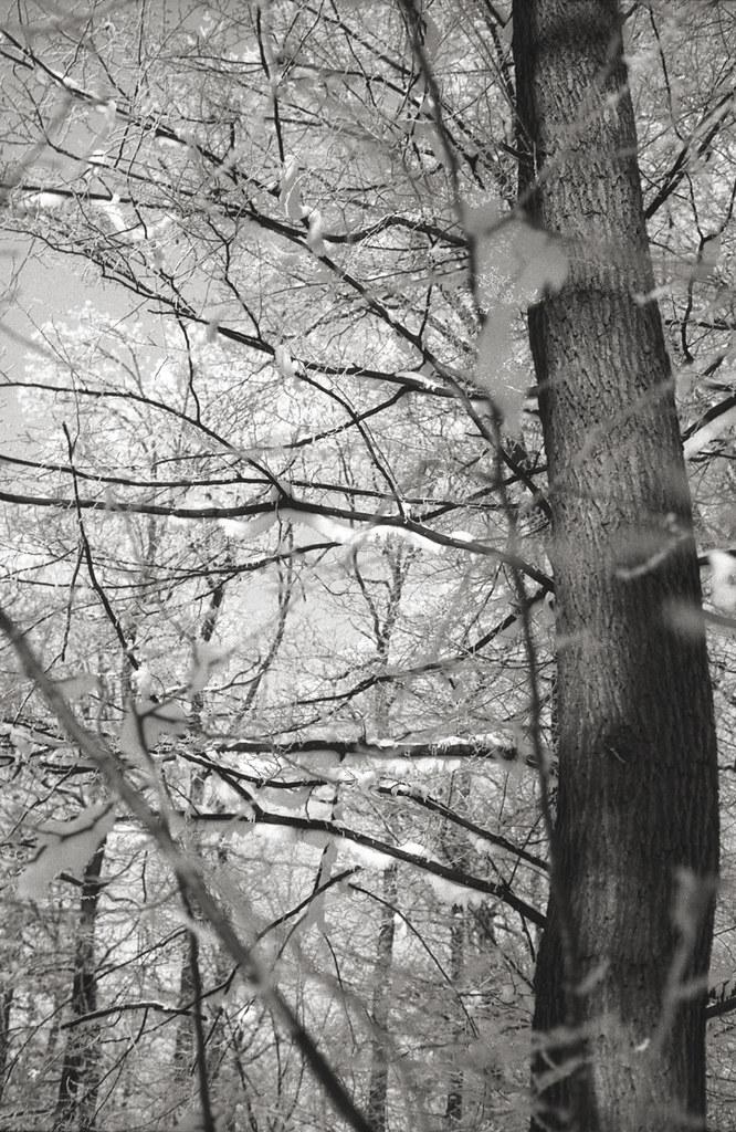 Leica Summicron-M 50mm f2 - 125 RGB