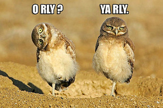 o rly ya rly by batwing was here on flickr