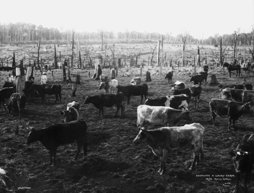 Founding a dairy farm
