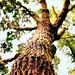 Tree_Mold_Fungus_Algae_1
